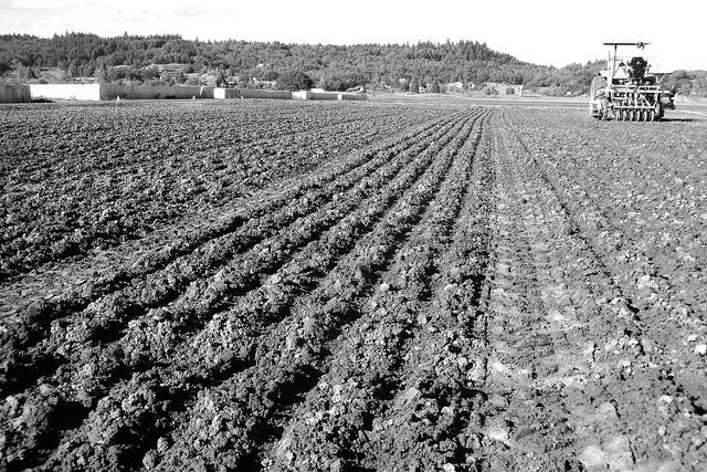 Barley field.