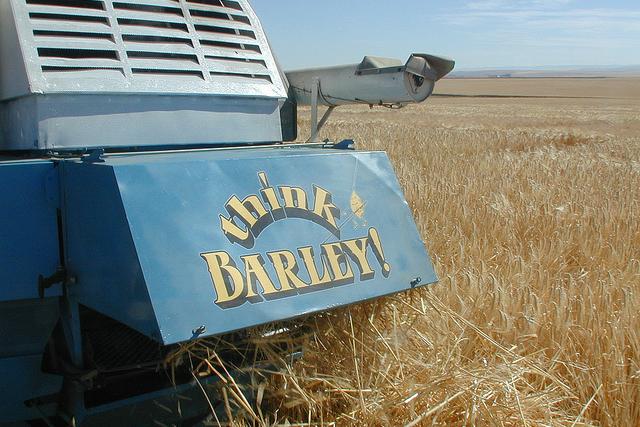Barley harvester.