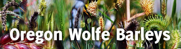 Oregon Wolfe Barleys title