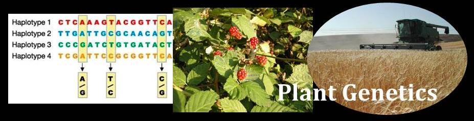 Plant Genetics title